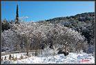 Sierra de mariola nevada