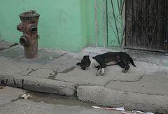 Siesta Amigo Perro