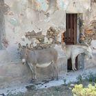 SIESTA (Asinara)