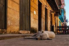 Siesta in der Altstadt von Havanna