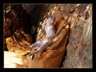 Siesta in St. Llorenc de la Muga - Aufgewacht;-)