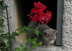Siesta unter Rosen
