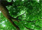 Siesta unterm Walnußbaum