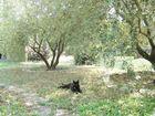sieste à l'ombre d'un olivier