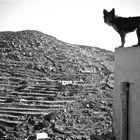 sifnos chora, kyklades greece 1985