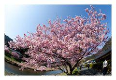 Signe of spring-2