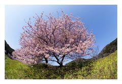 Signe of spring-3