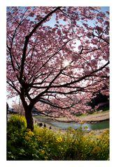 Signe of spring-4