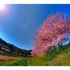 Signe of spring-6