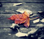 Signs of autumn ...