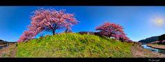 Signs of spring   [Zeichen des Frühlings]