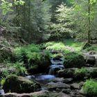 Silberbach im südl. Teutoburgerwald / Eggegebirge