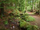 Silberbachtal im Herbst mit Moos, Wasser, Wald