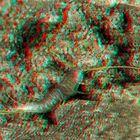 Silberfisch [3D]