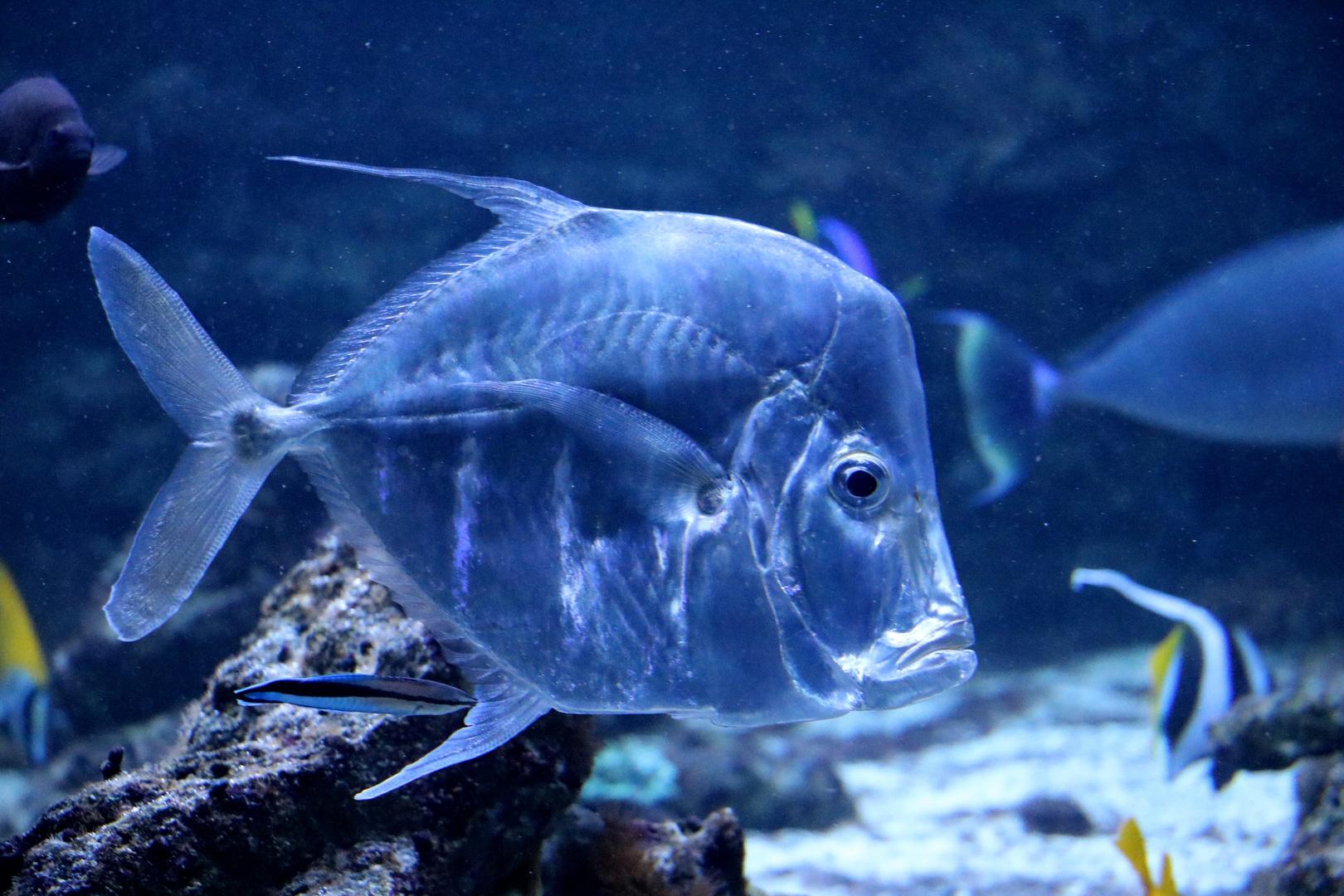 silberner fisch foto amp bild natur zoo tiere bilder auf