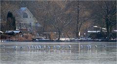 Silberreiher auf dem Sacrower See 01