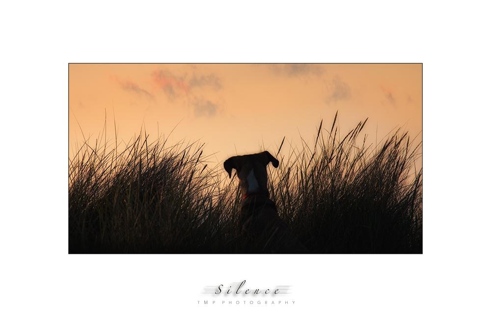 ~ Silence ~