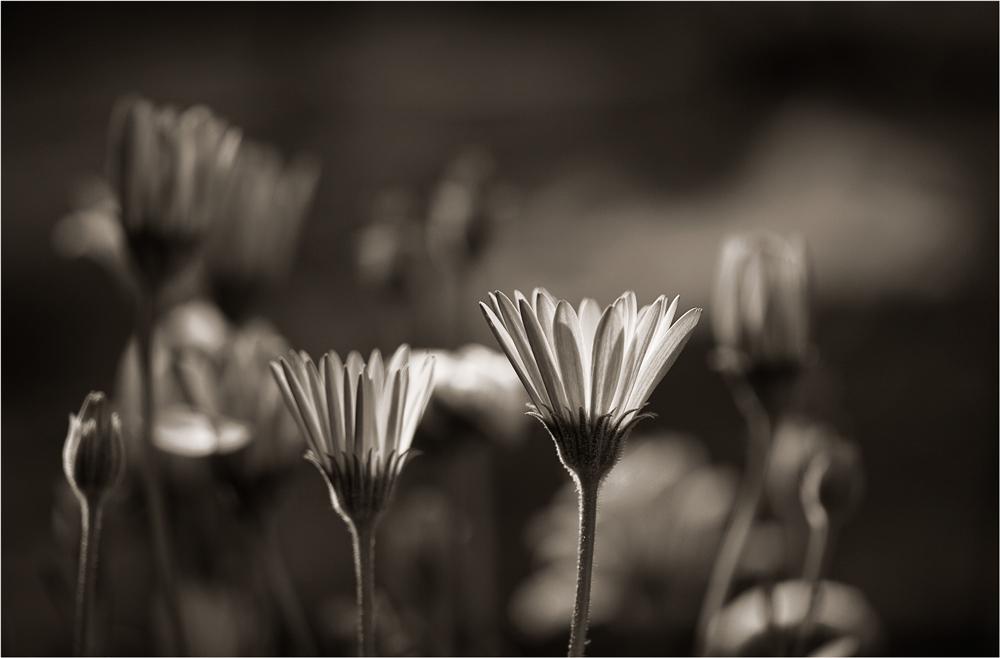 silence in the dark ...