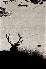 Silhouette 1......