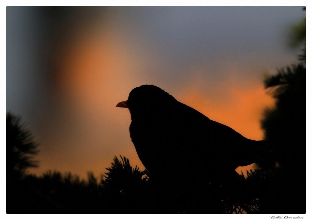 ..silhouette!..