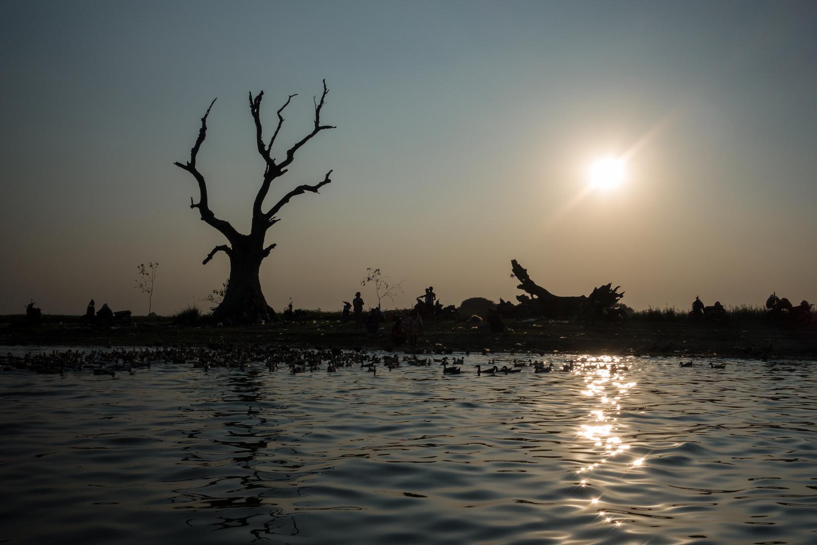 Silhouette eines Baums