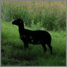 silhouette of a black sheep at holystone hall