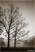 Silhouetten im Herbst