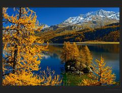 Silsersee und Lärchengold