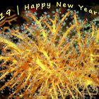 Silvester-Feuerwerk   Korallen-Polypen