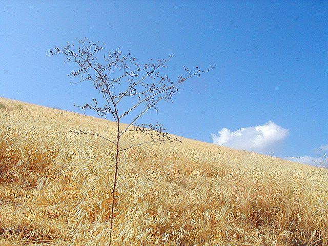 Simi Valley Hillside