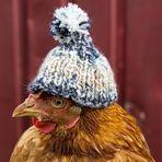Simone, das diebische Huhn! ;-)