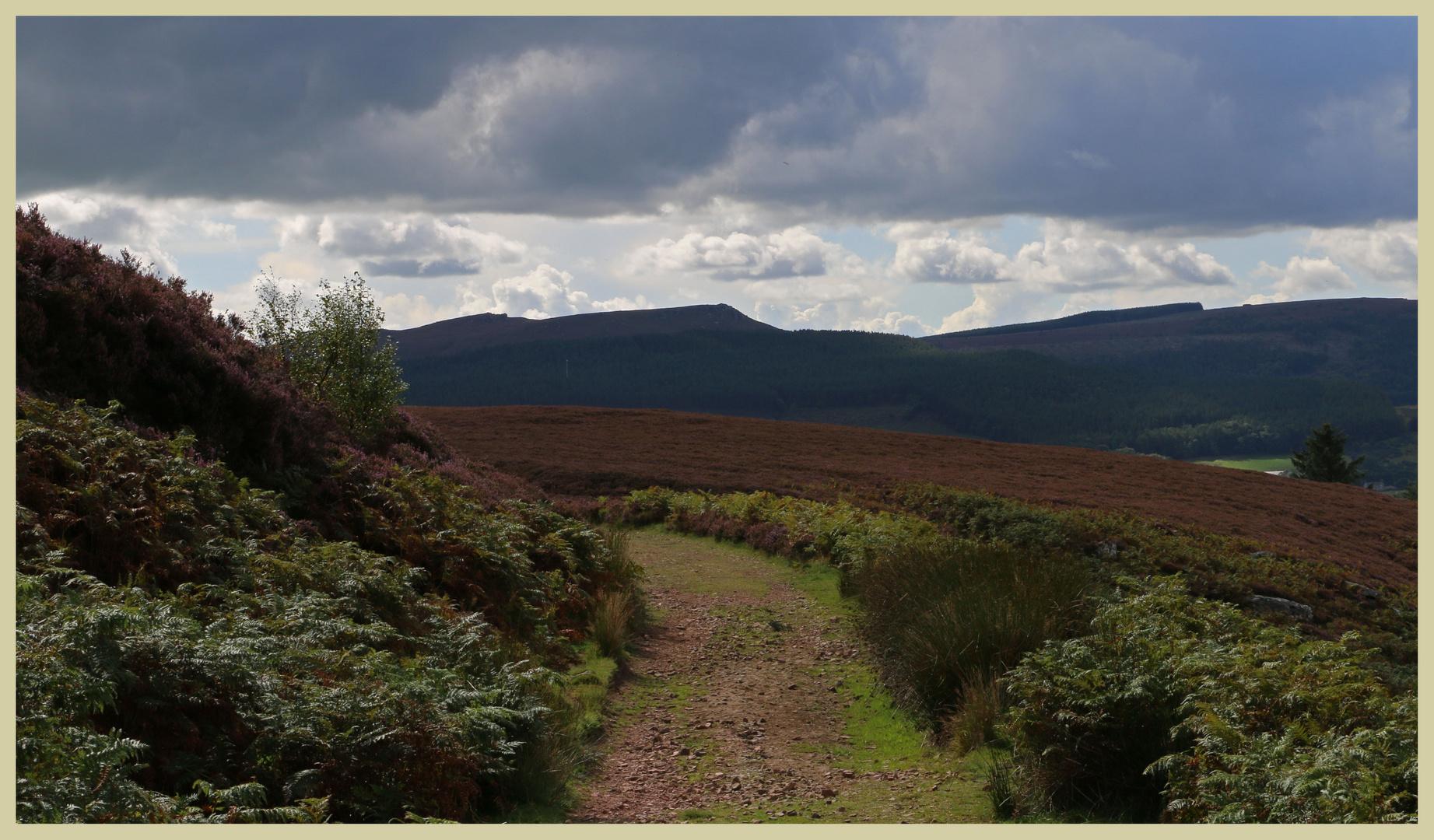 Simonside hills near Thropton