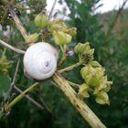 Simple snail.