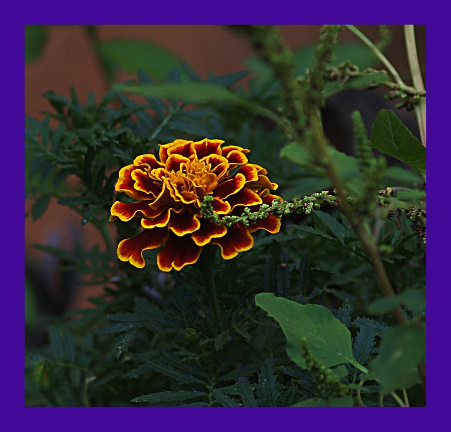 Simplemente Flor