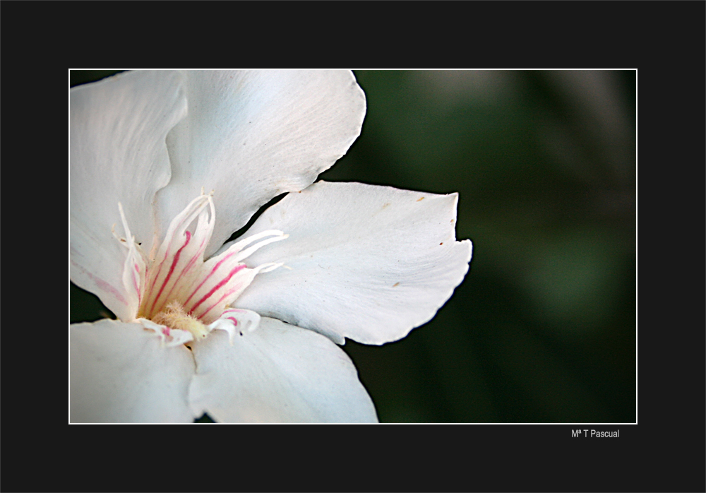 Simplemente una flor...!