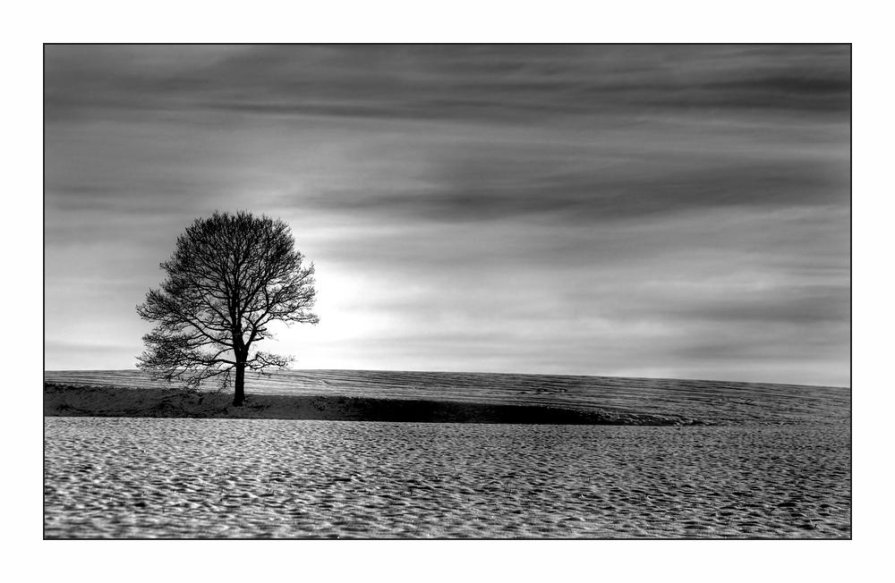 simplicité de la nature hivernale