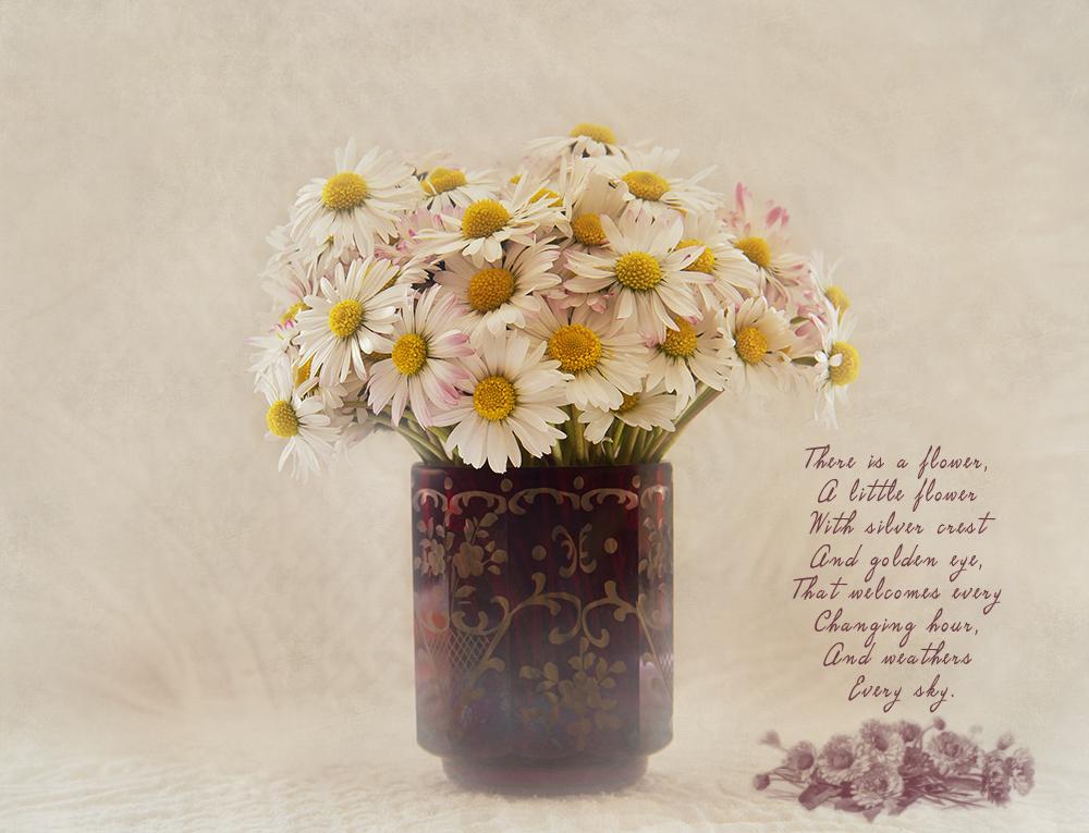 Simply daisies....