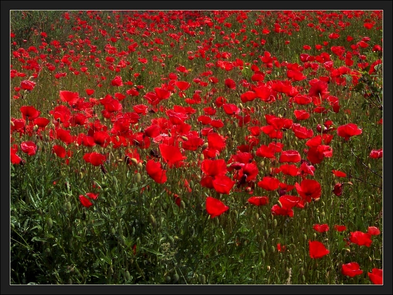 simply red...