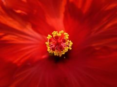 Simply Red ...