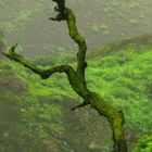 Sin hojas... ¡pero verde!