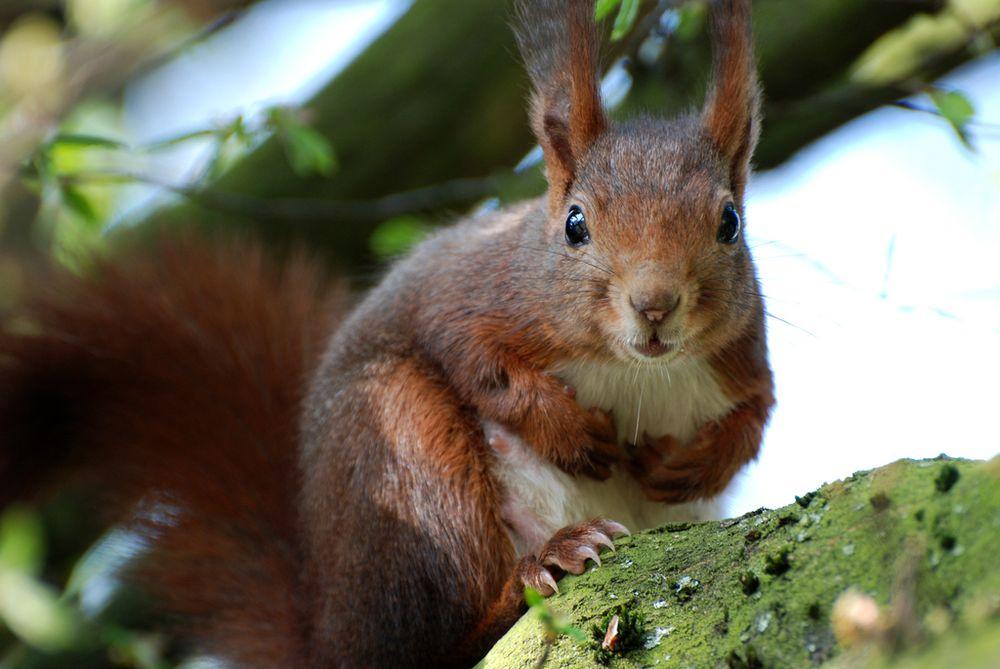 Sind alle Nüsse für mich?
