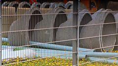 Sind Blumen im Gefängnis erlaubt ?