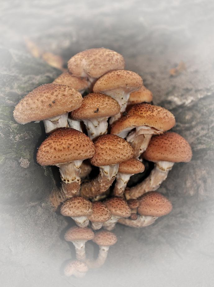 Pilze Sind Keine Pflanzen