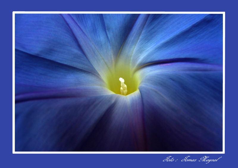Sinfonia en Azul
