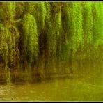 Sinfonia primaverile in ..verde