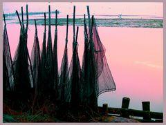 Sinfonia....in rosa......