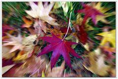 sinfonie d autunno...