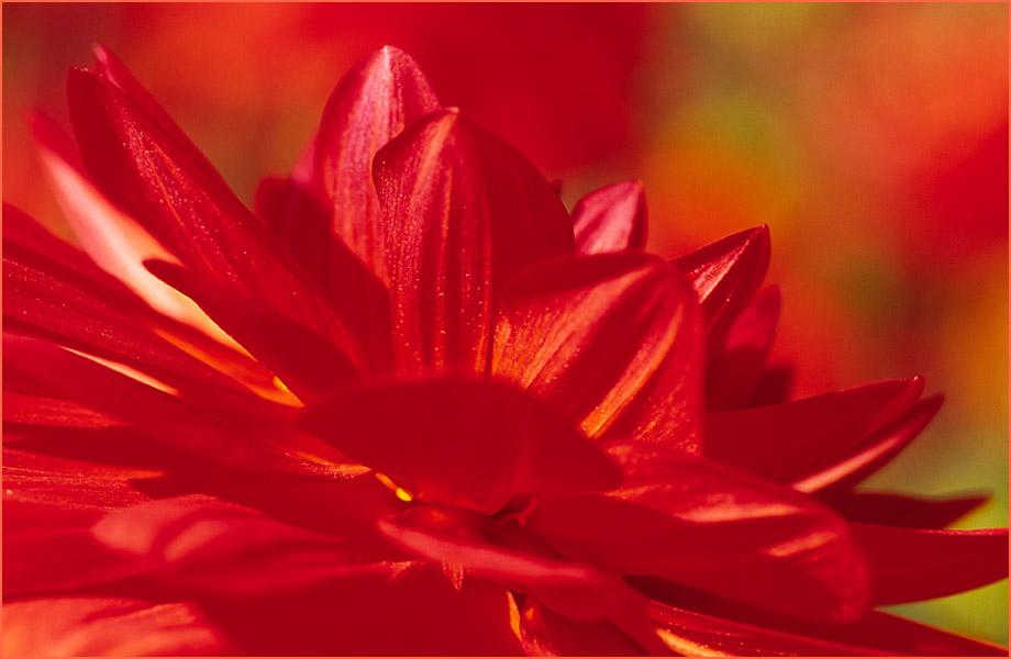 Sinfonie in Rot