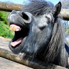 Singing Donkey ;-))