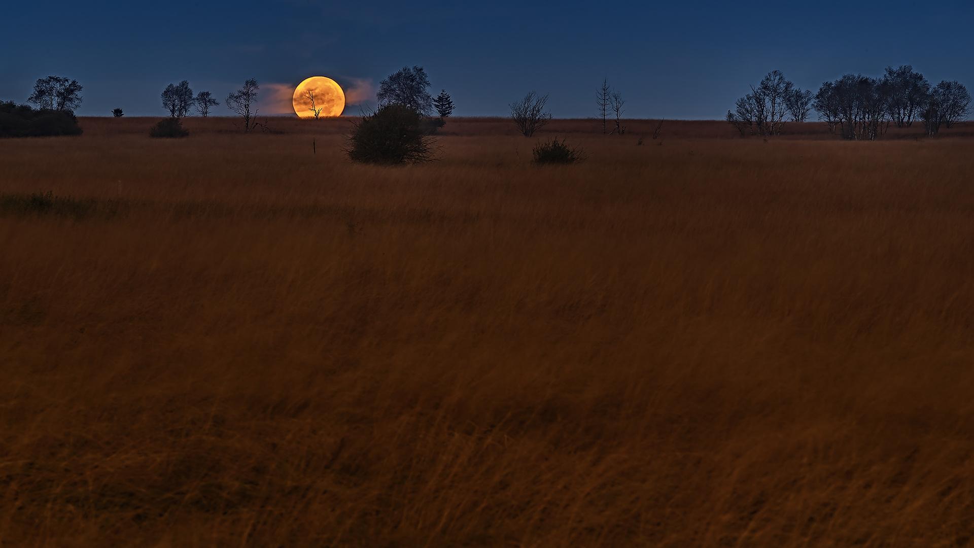 Singing in the moonlight